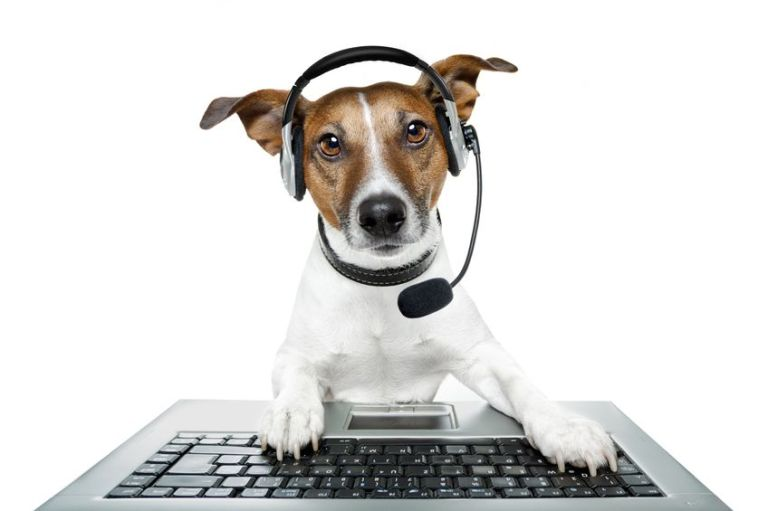 12470743 - dog with headset using a laptop